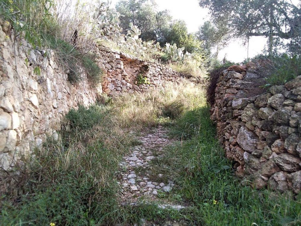 Camí des Bardal (Sant Agustí)